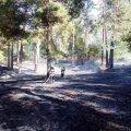 У Житомирському районі гасили лісову пожежу
