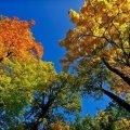 Якою ж буде погода в Житомирі 17 вересня?