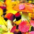 Прогноз погоди в Житомирі та області 19 вересня