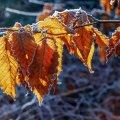 Прогноз погоди на 24 вересня у Житомирі та в області
