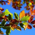Какой будет погода в октябре: синоптик шокировал прогнозом