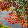 Прогноз погоди на 28-29 вересня у Житомирі