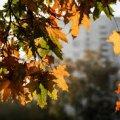 Температура повітря в Житомирі у перший тиждень жовтня підніметься до 23 градусів