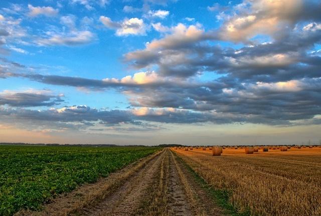 По какой цене Зеленский распродаст государственные сельхозземли