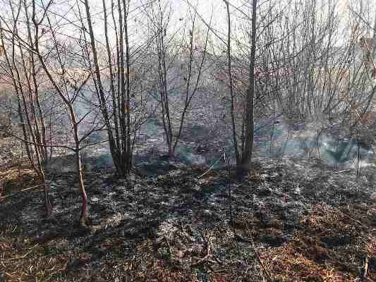 Житомирська область: упродовж минулої доби рятувальники залучались до ліквідації загорянь сухої рослинності, сміття та грубих кормів