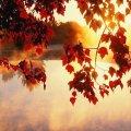 Прогноз погоди на день 1 жовтня в Житомирі