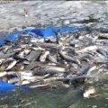 На Житомирщині відбудеться зарибленння ще однієї водойми