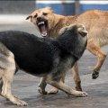 У Новоград-Волинському місцеві жителі потерпають від нападів агресивних безпритульних собак