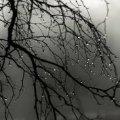 Житомирські синоптики попереджають про різку зміну погоди