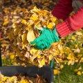 Що робити восени з листям?