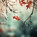 Прогноз погоди на 8 жовтня у Житомирі та області