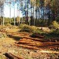 В одному з лісогосподарських підприємств Житомирщини незаконно зрізали 980 дерев