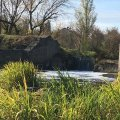 Знову зафіксовано чергове забруднення річки Хомора