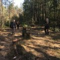 В Новоград–Волинському районі намагались вивезти лісопродукцію на суму майже в 200 тис. грн.