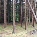 На Житомирщині під час валки лісу сталася смертельна трагедія