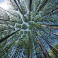 Ліс у смартфоні: Держлісагентство запустило пілотний проект e-реєстру заготівлі деревини та онлайн-карту рубок