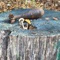 Піротехніки ДСНС області знищили два вибухонебезпечні предмети часів минулих війн