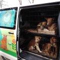 Стерилізовано близько півсотні безпритульних тварин Іршанської громади