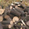 У лісовому масиві в Житомирській області чоловіка вбило сухе дерево