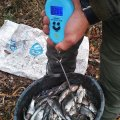 В Бердичівському районі затримано порушника, який завдав збитків рибному господарству більш ніж на 25 тис. грн.
