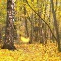 Якою завтра буде погода в Житомирі та області