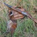 На Житомирщині розслідують кримінальне провадження щодо конфлікту із застосуванням мисливської зброї, що призвело до загибелі однієї людини