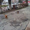 У Новограді-Волинському двох жінок покусав собака. ФОТО