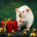 Чем опасен год Белой Крысы
