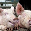 Украина переходит на новые правила ввоза животных и продуктов из них