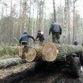 В Олевському районі поліцейські затримали нелегального лісоруба, який встиг повалити 7 дубів