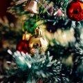Главную елку Украины в этом году привезут из Житомирской области