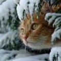 Синоптики розповіли, якою буде погода на Житомирщині 28 листопада