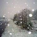 Наступного тижня у Житомирі та області очікується погіршення погоди: до 8 см снігу