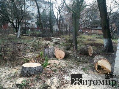 У дворах за сквером на Лятошинського зрізають аварійні дерева. ФОТО