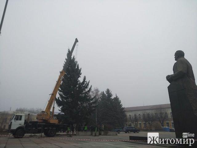 У Житомирі встановили головну новорічну ялинку. ВІДЕО