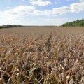 Главный схематоз земельной реформы скрыт от широкой публики