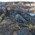 Працівник міської ради в Житомирській області впав на зрізану гілку на кладовищі та згодом помер у лікарні