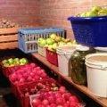 Головні правила, які допоможуть вам зберегти врожай до весни