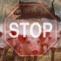 В Житомирському районі виявлено випадок африканської чуми свиней