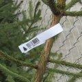 Житомирські лісівники закликають громадян купувати легально заготовлені хвойні дерева