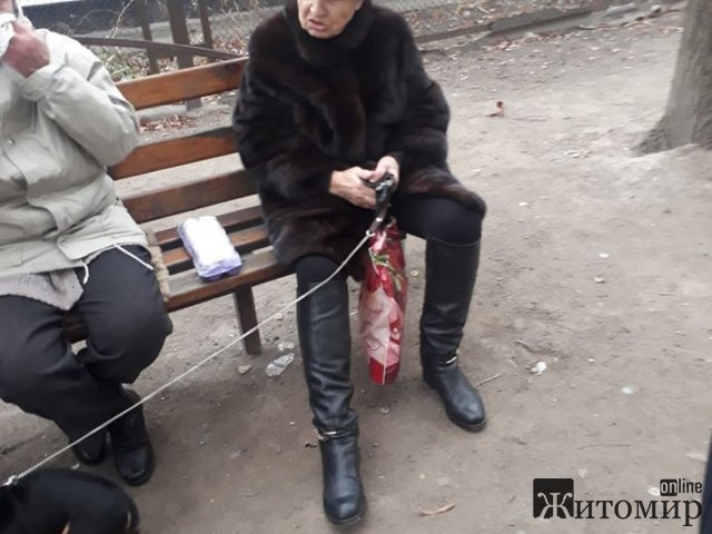 На проспекте Мира бабушка била ногой собаку, житомирянка написала заявление в полицию
