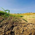 Прокуратурою Житомирщини відновлено права 124 співвласників земельних паїв вартістю 2,7 млн грн