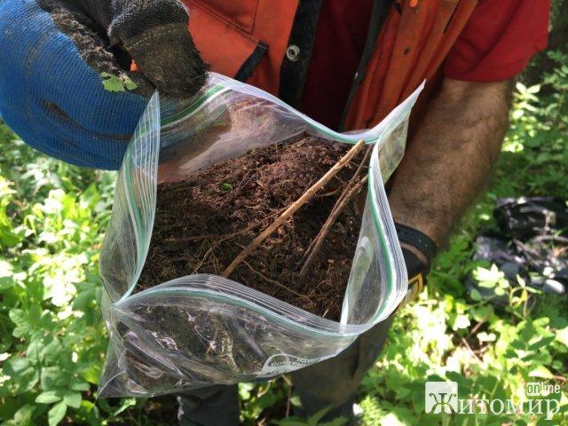 Фахівці виявили перевищення вмісту кишкової палички в ґрунті на території дошкільних закладів у 5 районах Житомирської області