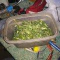 В одному з сіл Житомирської області у сімейних дебоширів поліцейські виявили запаси коноплі