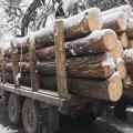 У двох районах Житомирської області поліцейські затримали автомобілі з краденим лісом