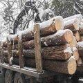 У Лугинському та Олевському районах поліцейські затримали автомобілі з краденим лісом