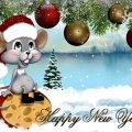 Что нельзя ставить на стол в год Крысы