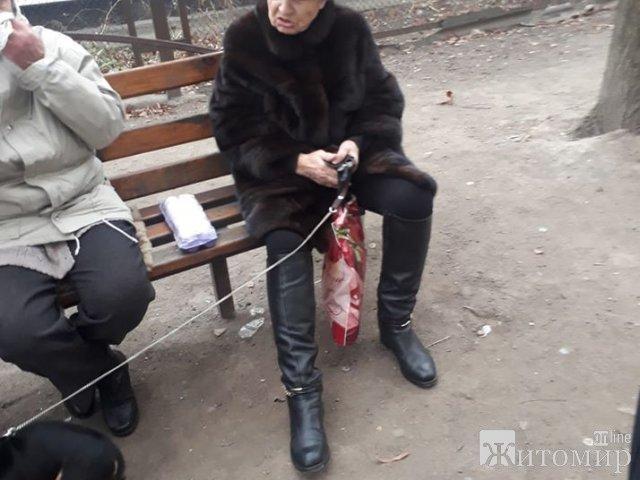 Собаку, которую на проспекте Мира била старушка, забрали волонтеры