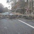 У Житомирській області сильний вітер повалив дерева, які повністю перекрили автошлях