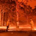 В лісових пожежах Австралії загинули понад мільярд тварин – дослідники